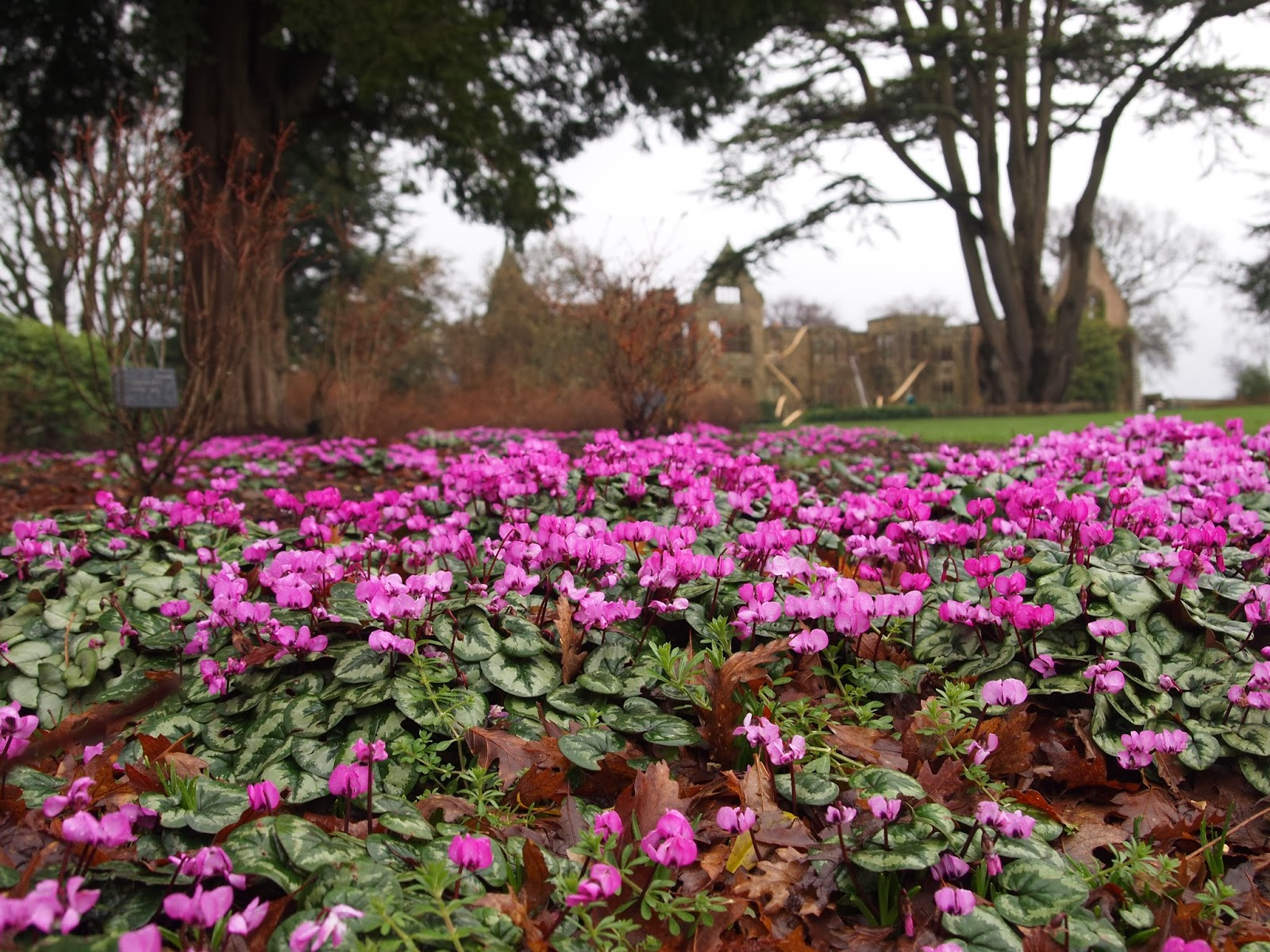 Winter flowers in the landscape, review by garden designer Borrowed Space