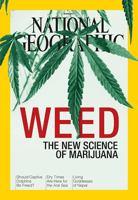 WEED THE NEW SCIENCE OF MARIJUANA   NATIONAL GEOGRAPHIC