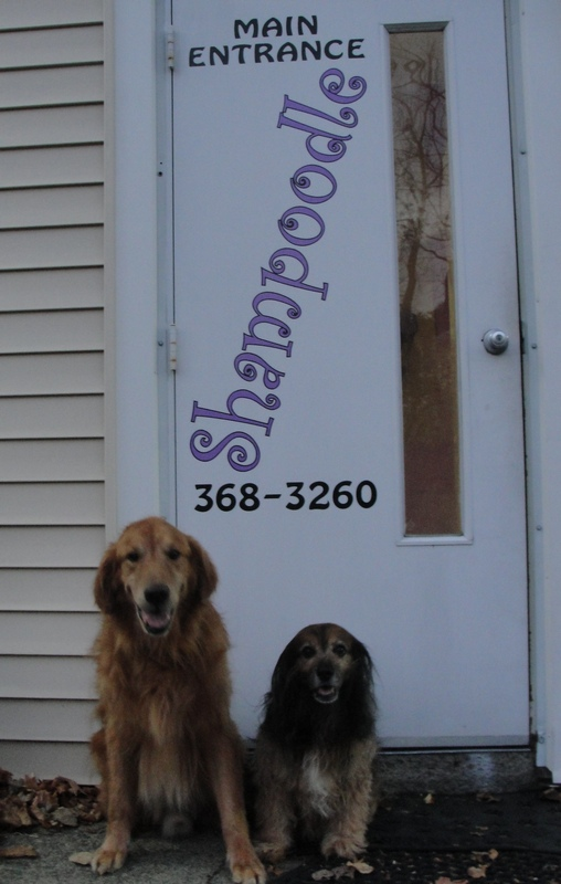 The writers dog two very different dogs one do it yourself dog wash saturday kelly and brooks took us to shampoodle dog wash and spa in delmar ny usually we bathe the dogs in the tub which requires kneeling on the floor solutioingenieria Images