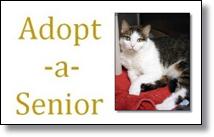 Picture of senior cat