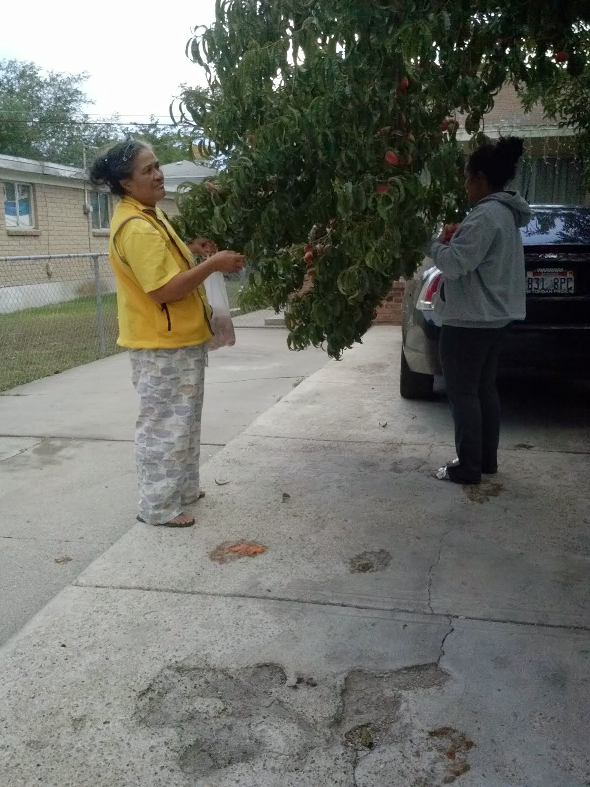 Mom and Loisi picking peaches