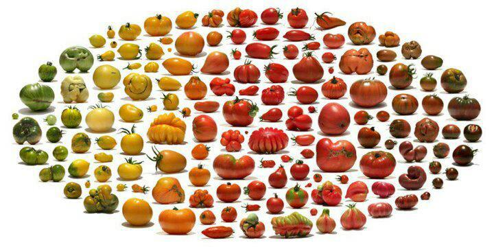 external image heirloom+tomato+spectrum.jpg