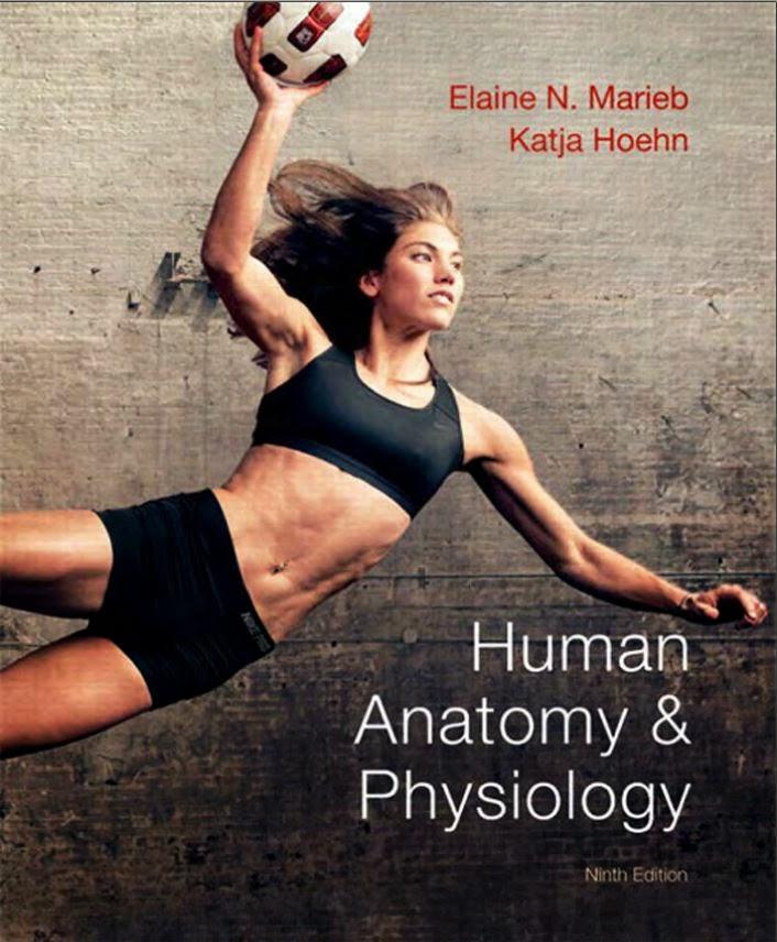 Nett Anatomie Und Physiologie Ebook Download Zeitgenössisch ...