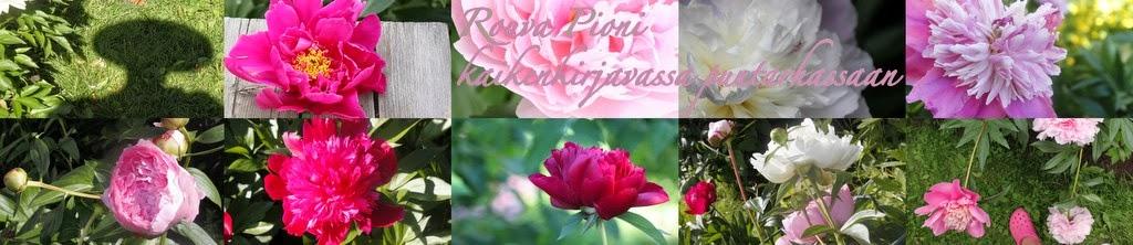 Rouva Pioni kaikenkirjavassa puutarhassa