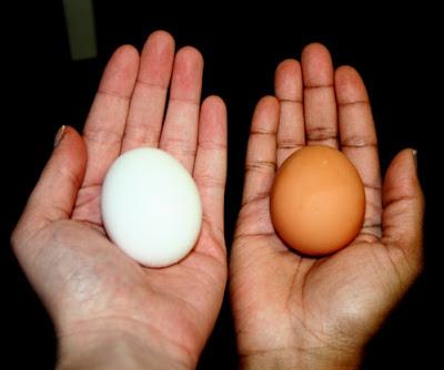 هل تعلم و تعرف ماهو الفرق بين البيض البني الاحمر والبيض الابيض