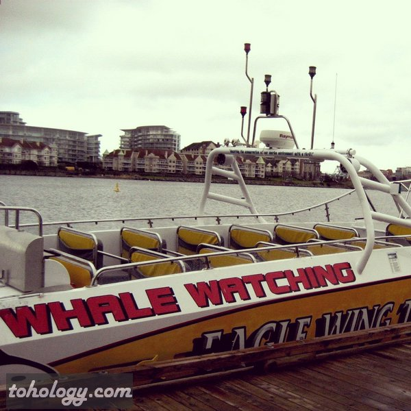 Whale Watching tours in Victoria, British Columbia, Canada