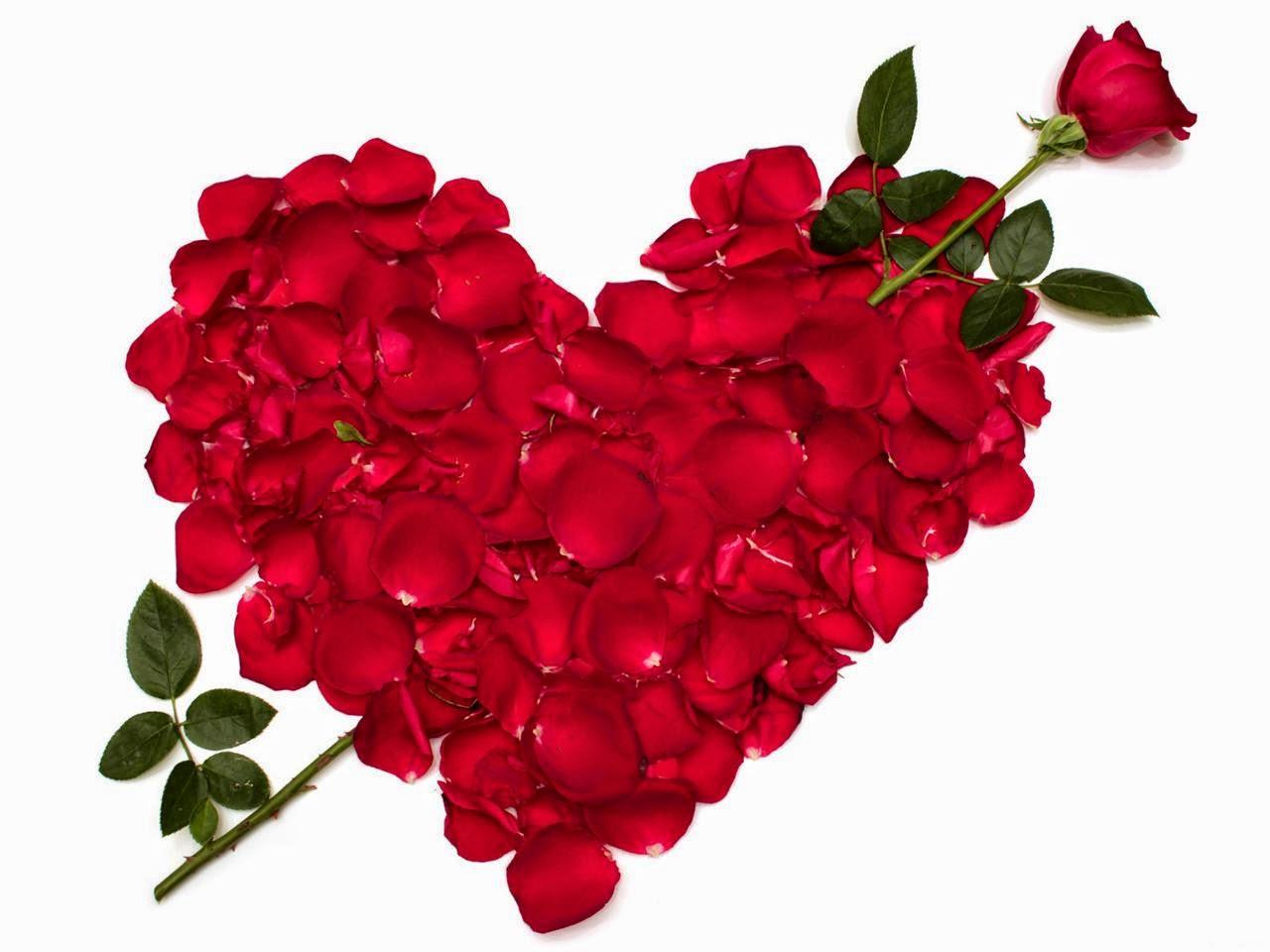 rose flower meaning  flower, Natural flower