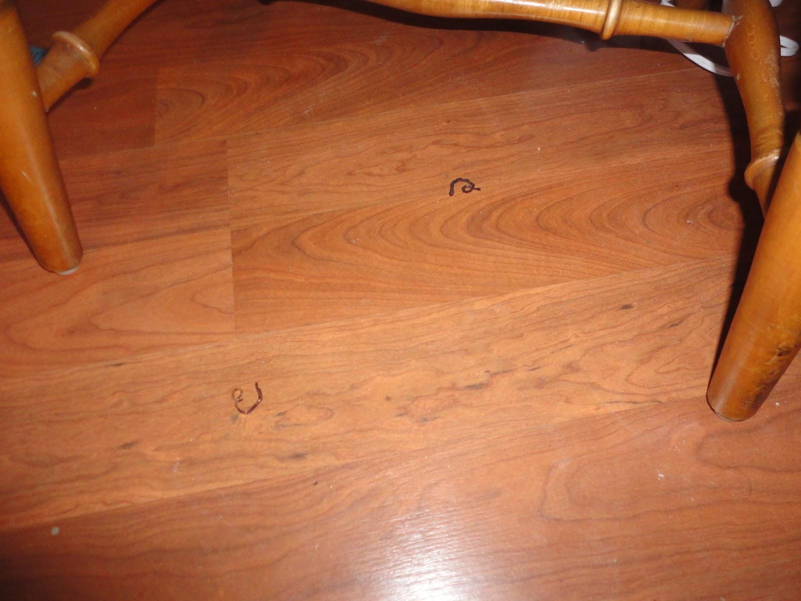 Maggots On Kitchen Floor Similiar Maggots On Floor Keywords