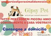 Gipsy pet