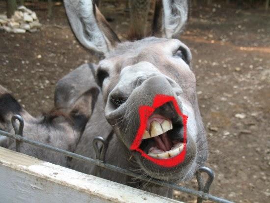donkey butt coffee