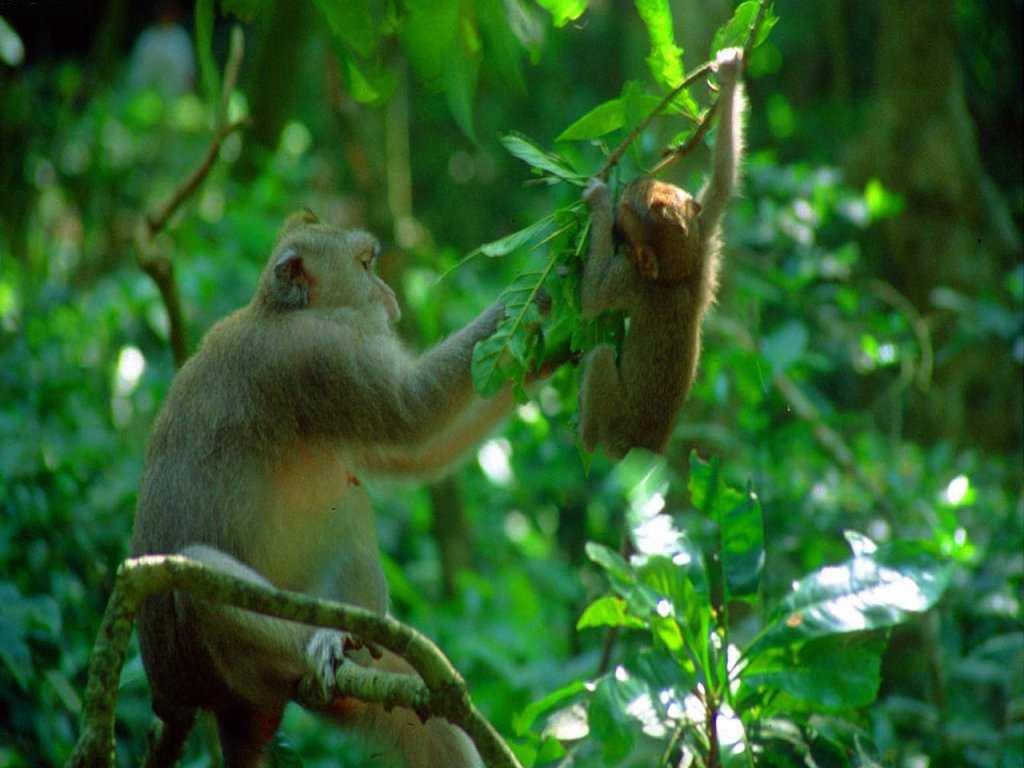 http://4.bp.blogspot.com/-EFRC2g_U_MA/US4uurl6XvI/AAAAAAAAHt8/USUOtHLMAAM/s1600/AnimalWallpapers1.jpg
