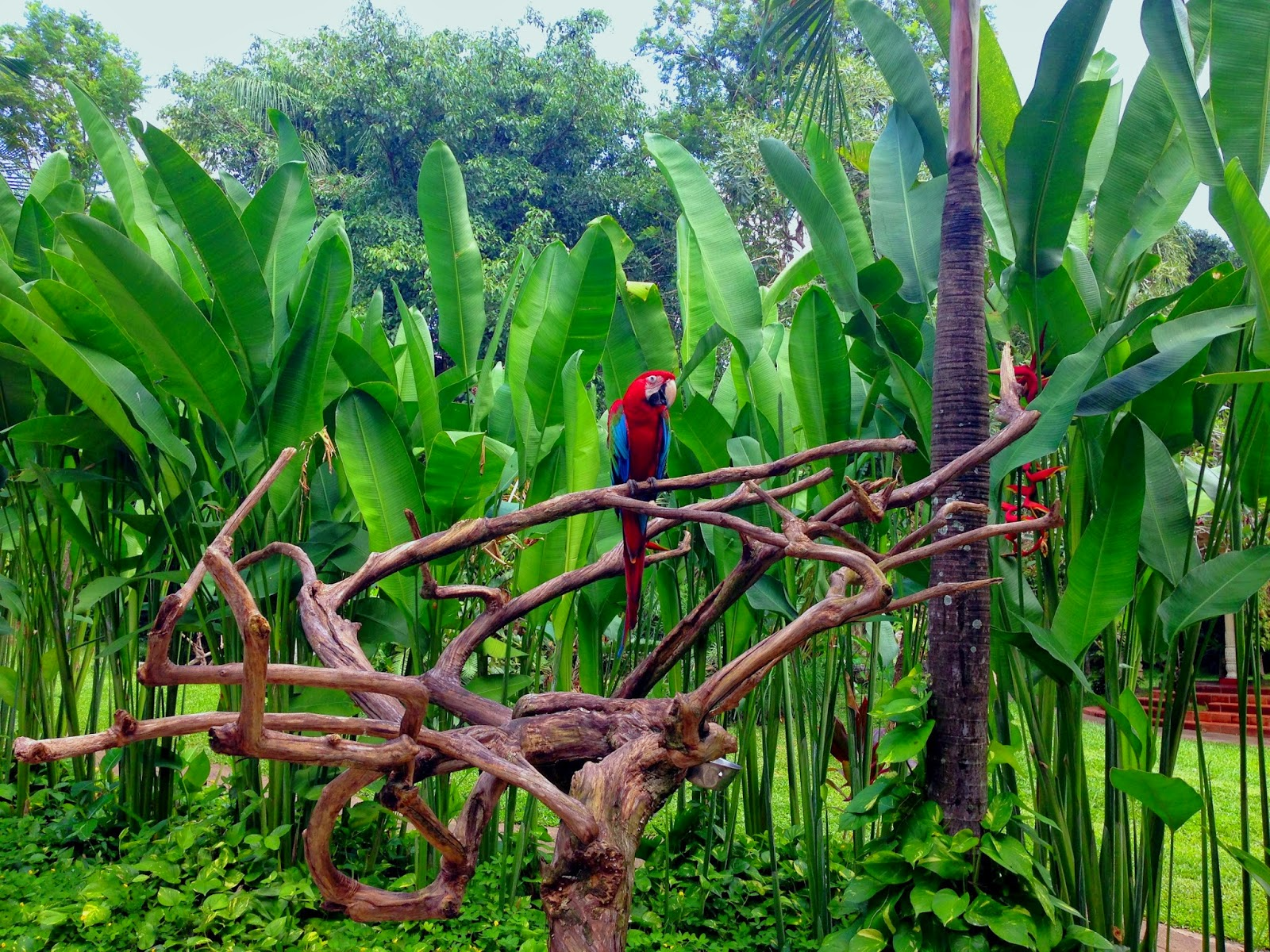 Bantall Living My Dream At Bali Bird Park Voucher Tiket Masuk Anak Wisata Is Located In Gianyar About 40 Minutes To The North From Kuta By Motorcycle So It Not Hot As Downtown Denpasar For