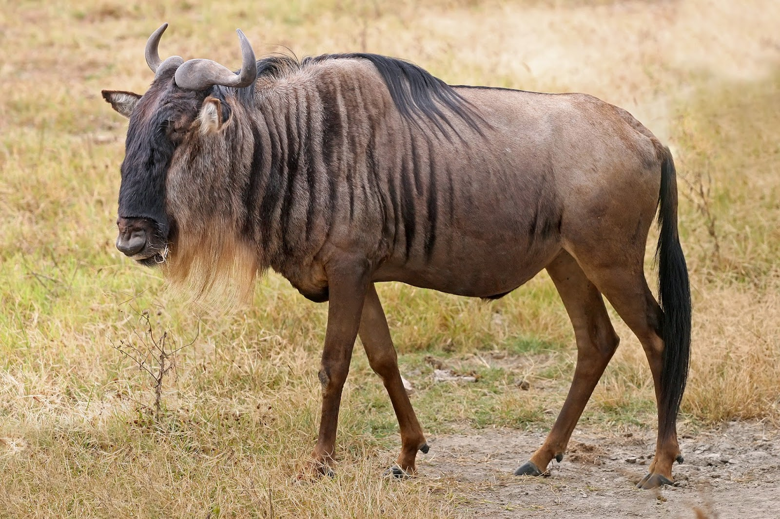 Las 10 Mas Extremas Migraciones del Reino Animal