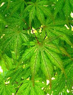 Flora Wonder Blog Take A Visual Journey