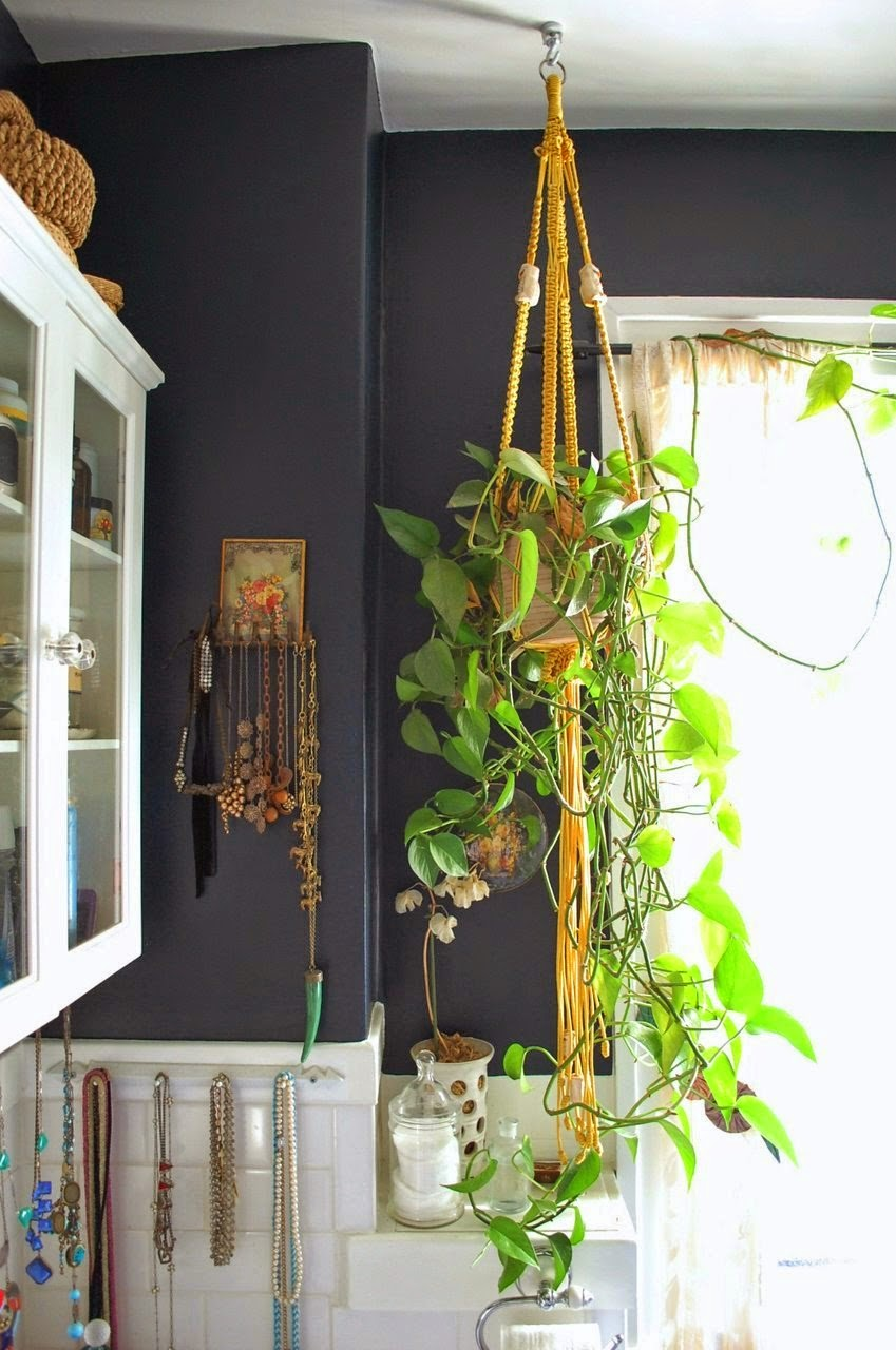 Dark Blue Walls And House Plants