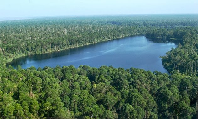 Komitmen Nol Deforestrasi Harus Dilanjutkan