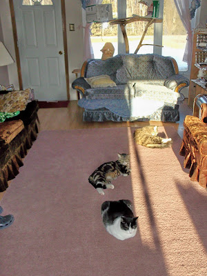 four cats in sunshine