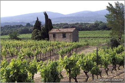 Languedoc-Roussillon - Minervois