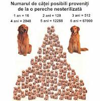 piramida inmultirii populatiei pentru animalele nesterilizate