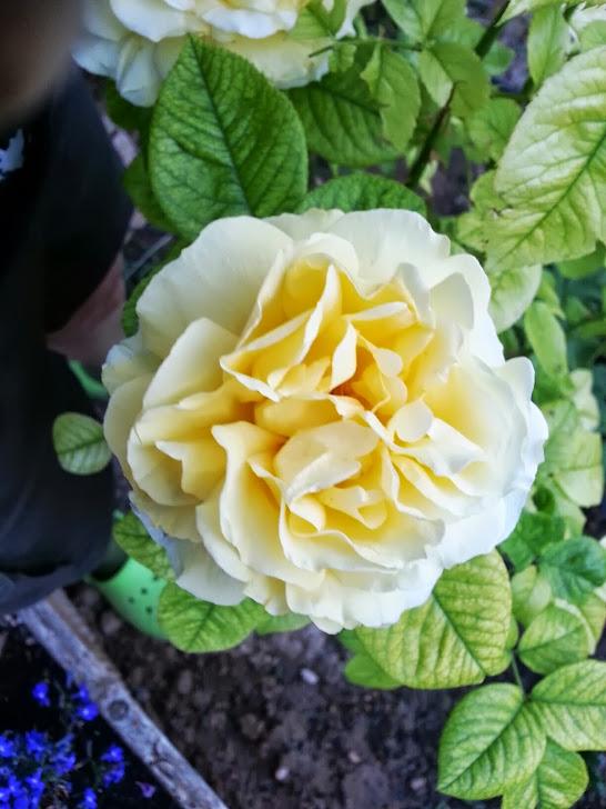 Un Jardin para Valentina