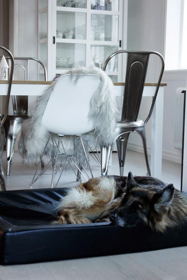 hundsäng, Ö&B, hund, matsal, sovplats för hundar, fårskinn, matstolar, vitt, stålstol,