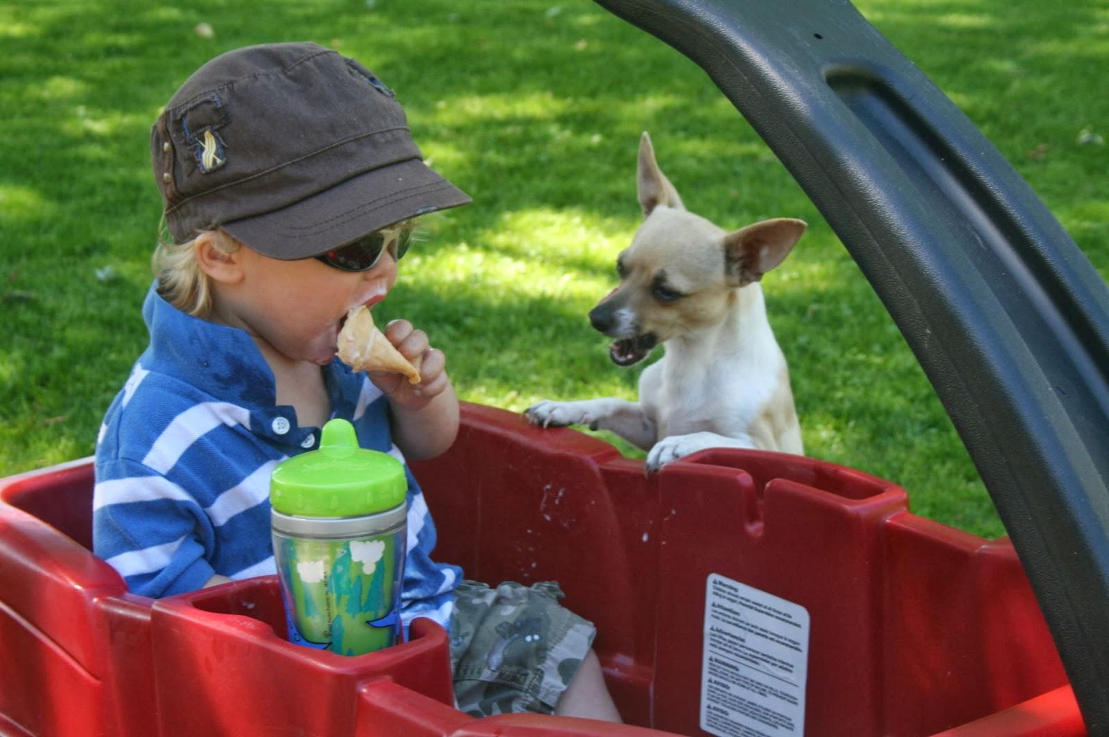 Niño y perro