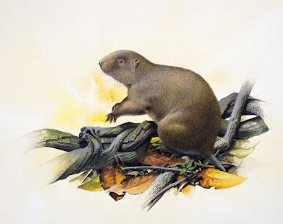 Hutia de la isla Cisne Geocapromys thoracatus