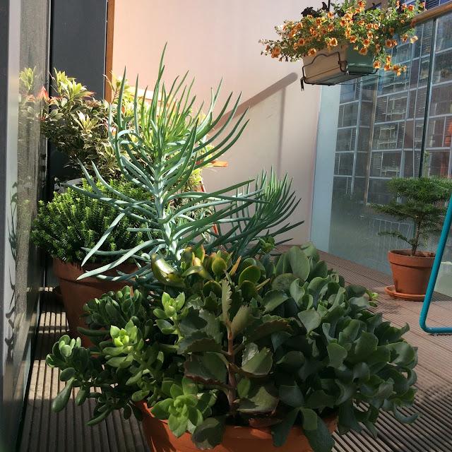 http://4.bp.blogspot.com/-EIg0OdPHTO4/VagS-An18RI/AAAAAAAAOjA/4prMtpOFwVg/s640/succulents.jpg