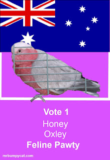 Picture of a galah (pink and grey bird) against an Australian Flag background. Text Vote 1 Honey Oxley Feline Pawty