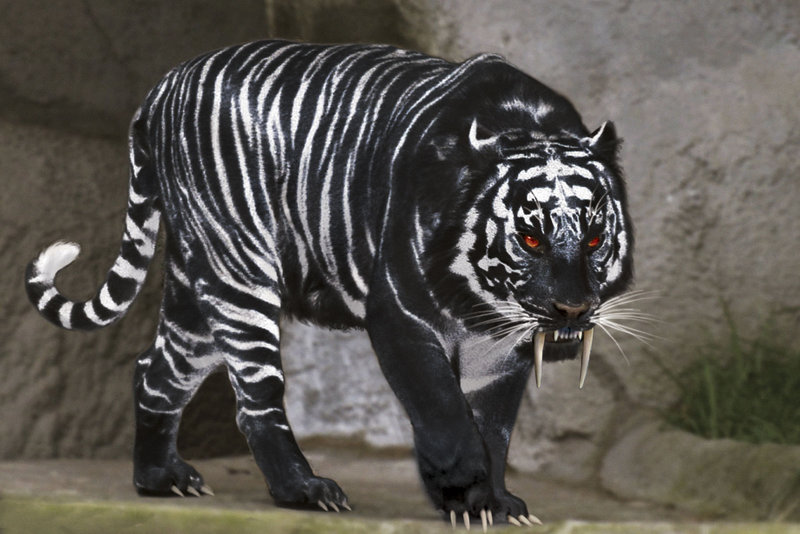 black tigers animal - photo #7