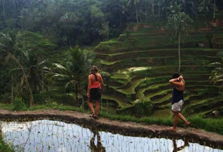 Rice Field Trekking at Tegallalang Rice Terrace