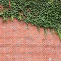 ブロック塀,蔦,新宿住友ビル〈著作権フリー無料画像〉Free Stock Photos