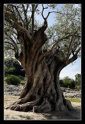 Ajuda a plantar árvores de formas simples, giras e gratuitas / ways to help save forrest, find out