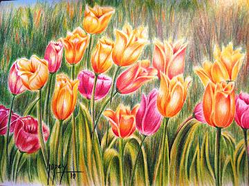 Tulipanes, lápiz acuareleable