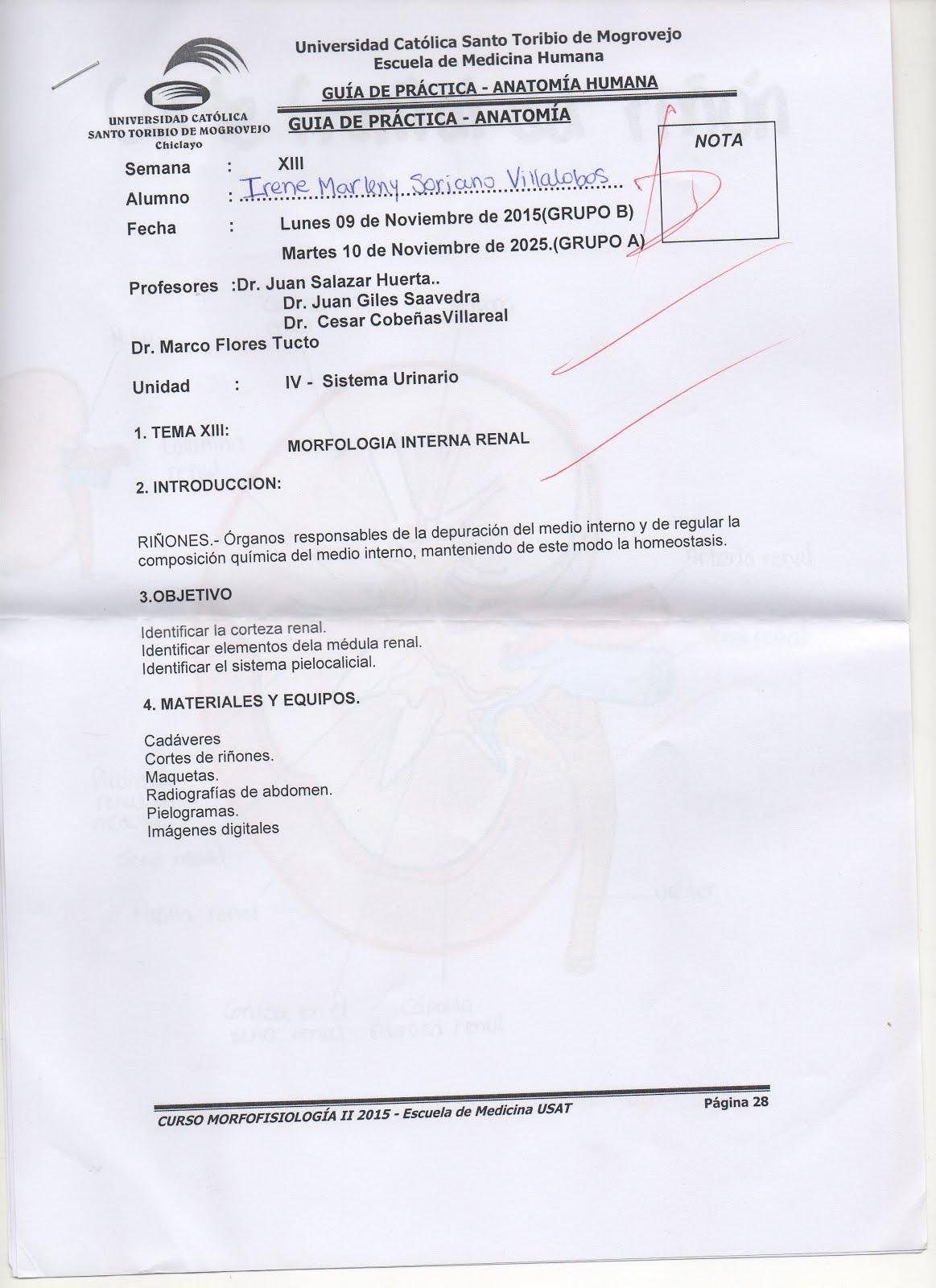 CAMINO DEL ESTUDIANTE DE MEDICINA : DIBUJOS ANATOMÍA SEMANA 13 ...