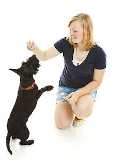 puppy dog obedience training tips