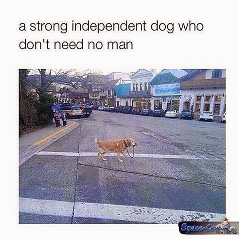 funny independent dog picture