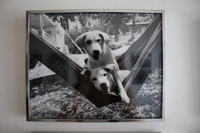 写真家藤代冥砂さん×KANAGAWA DOG PROTECTION 保護犬写真展