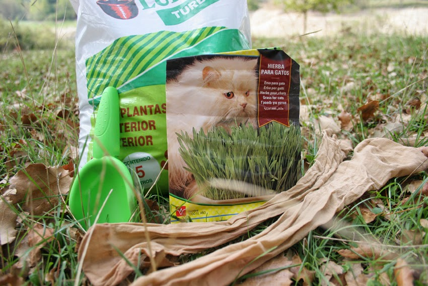 Manualidad y cuento el señor Hortiga hecho con tierra y semillas en media4