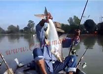Gila Mancing Ikan Patin Besar Pegang Ekor Mantap 2