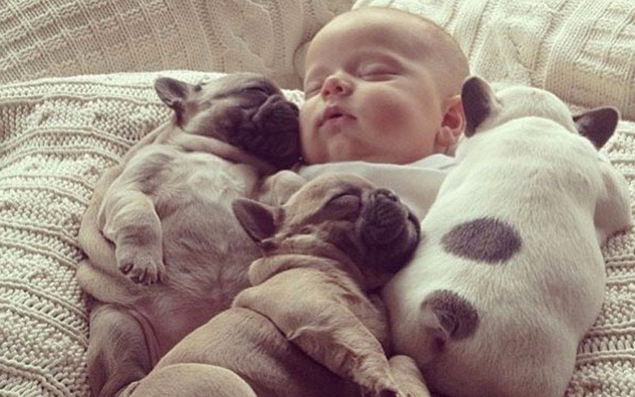 Baby and Pug Puppies Napping