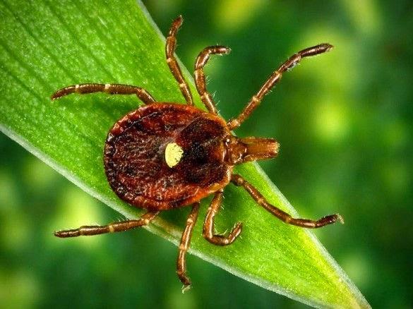 حشرة تحولك إلى نباتي فقط