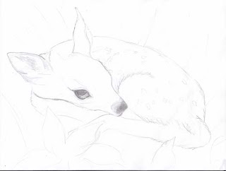 a sketch of a fawn