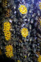 visitez une ruche sauvage en cliquant sur l'image