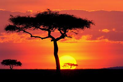 nature wallpaper sunset beauty