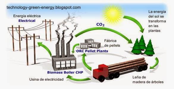 Infografía sobre el ciclo de la biomasa