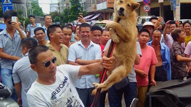 Un immagine dal Festival di Yulin