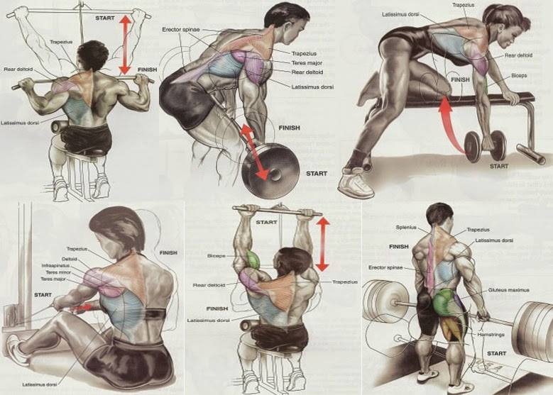 Back workout chart leg workout chart chest workout chart biceps