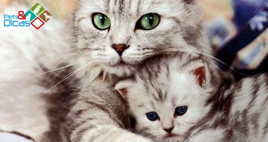 Por que algumas gatas comem seus filhotes?