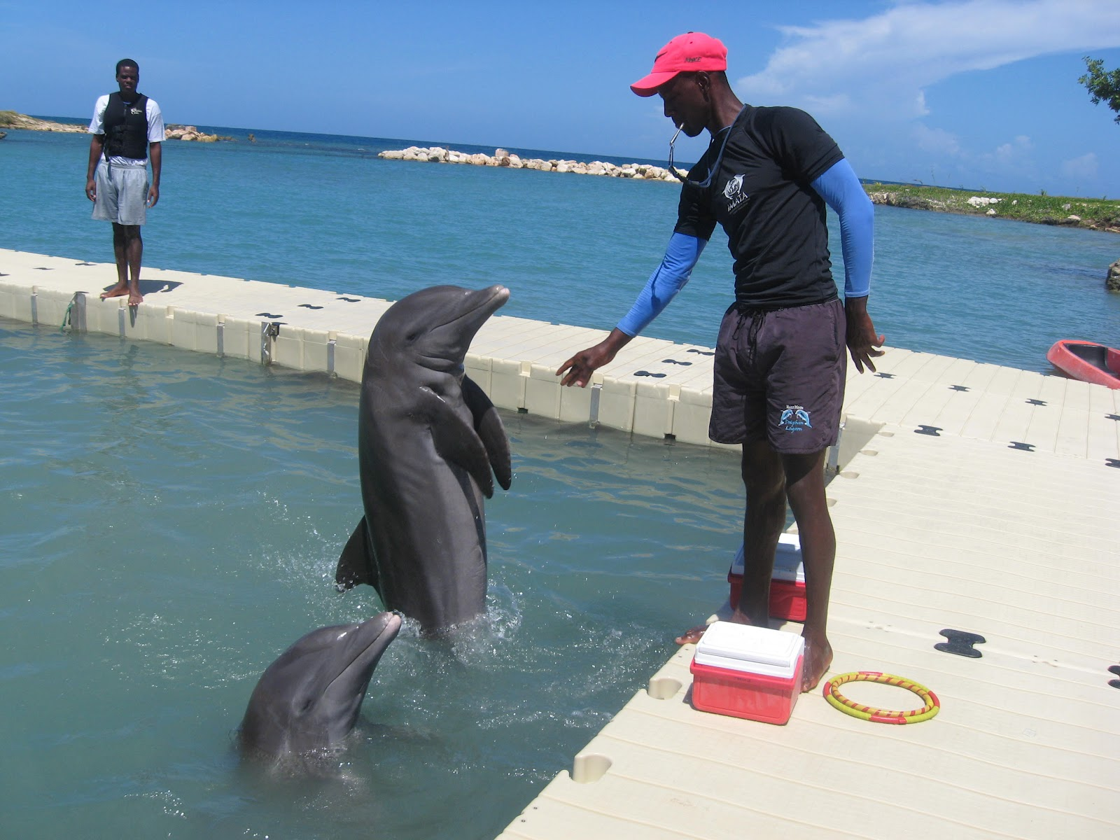 http://4.bp.blogspot.com/-ELUbyWl68LM/UGzhJf-J-zI/AAAAAAAAAr4/RIus7w3sjGw/s1600/Dolphin+with+trainer.jpg